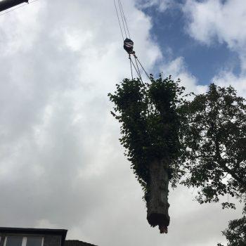 Kranfällung - Baumfällung