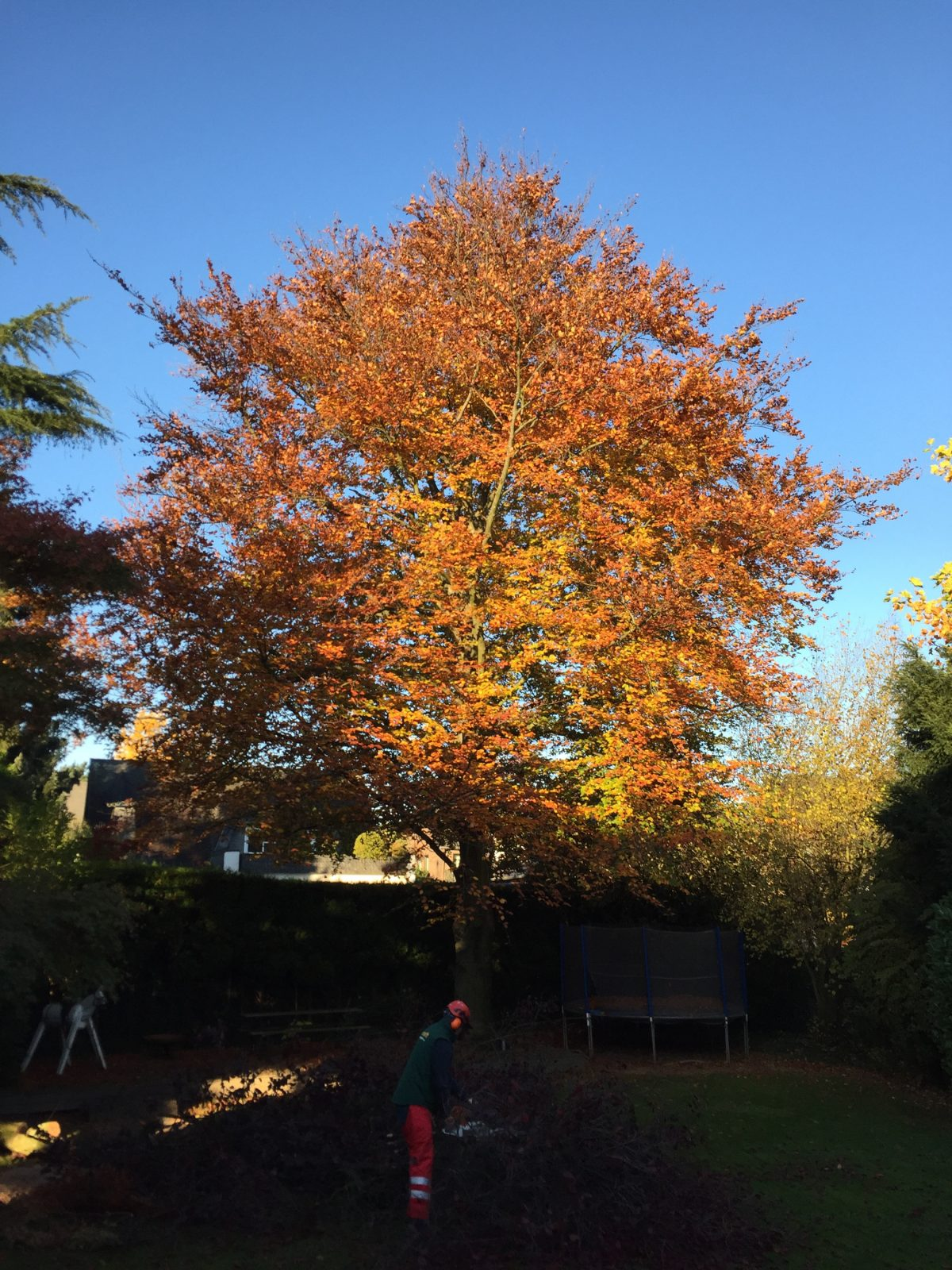 ZTV Baumpflege Totholzpflege