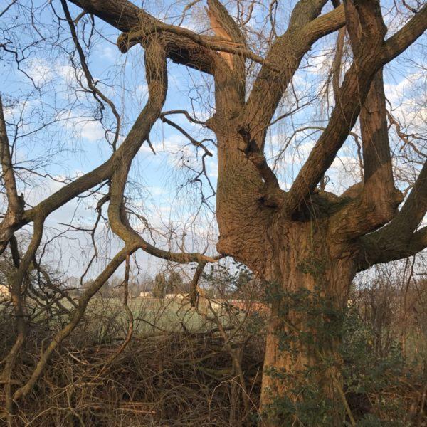 Der Bruchast war dann der halbe Baum