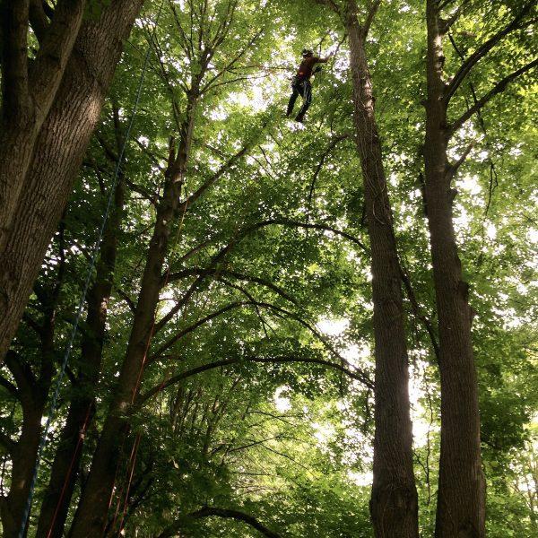 Totholzpflege Kronenpflege